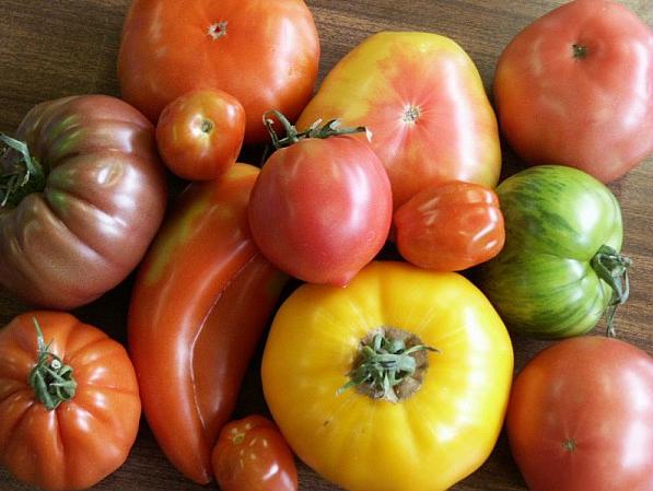 Image tomates